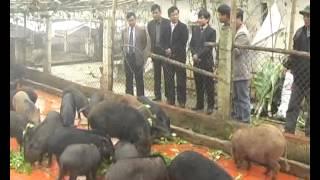 Download Mô Hình Nuôi Lợn Rừng ở xã Yên Bình - huyện Thạch Thất.flv Video