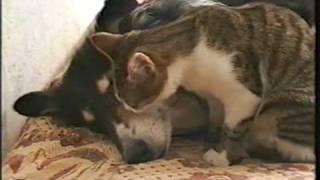 Download Котёнок и собака (Маня и Нюша) Video