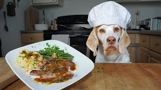 Download Chef Dog Cooks Steak Dinner for Friends: Funny Dog Maymo Video