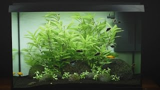 Download Juwel Aquarium Primo 70 LED Einrichtungsbeispiel / Tutorial Video