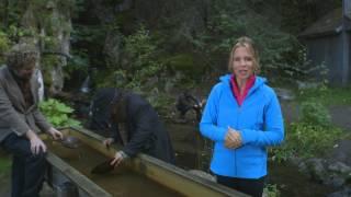 Download Disney Cruise Line in Alaska: Port Adventures Video