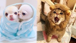 Download Funny Baby animals Videos Compilation 2019 Video