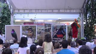 Download BirdAfair Unirte Video