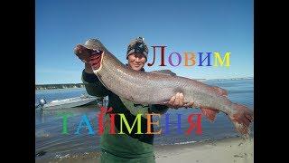 Download Ловим тайменя, осетра и налима! Рыбалка в Якутии! Yakutia Video