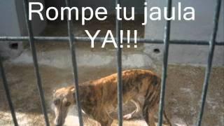 Download Asociación para el Rescate y Adopción de Galgos, Galgo Leku Video