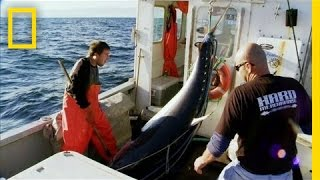 Download Tails Up Baby | Wicked Tuna Video