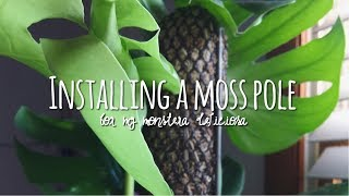 Download how to install a moss totem 🌵 / monstera deliciosa houseplant support 🌿 Video
