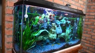 Download Mi acuario peces de aguas tropicales 150 litros HD (VII) jab Video