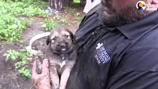 Download PUPPY RESCUE: You Won't Believe How Many Puppies Are Rescued From A Muddy Hole | The Dodo Video