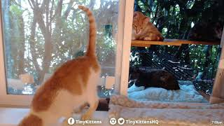 Download What feral cats do when they think no one's watching - TinyKittens Video