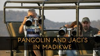 Download Pangolin Photo Safaris and Jaci's Lodges in Madikwe Video