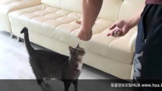 Download 고양이가 훈련을 받으면, 다합니다. Video