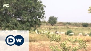 Download Nigeria's farmers adapt to climate change   Eco-at-Africa Video