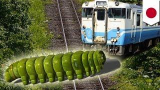 Download 毛虫が電車止める? 線路上に大量発生しブシャー Video