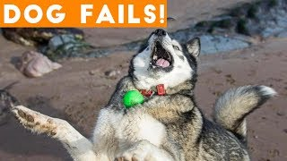 Download Dogs Have a Ruff Life Funny Fails Comp April 2018 | Try Not to Laugh Animals Funniest Pet Videos Video