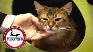 Download Кошки | Джуманджи. Животные в мегаполисе Video