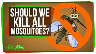 Download What If We Killed All the Mosquitoes? Video