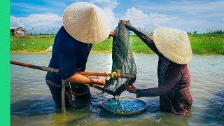 Download This river is FULL of food! (Hến trộn + Bánh bèo) Video