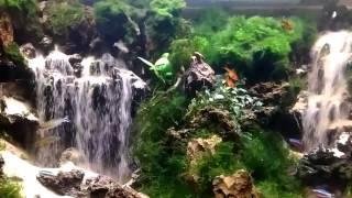 Download Waterfall asli tingkat DEWA..tertarik datang aj di lapak Special Gado2 Kranggan. SMG. Video