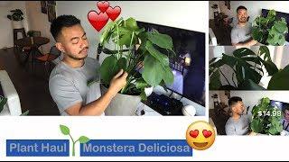 Download Monstera Deliciosa a Monstera Deal – Plant Haul Video
