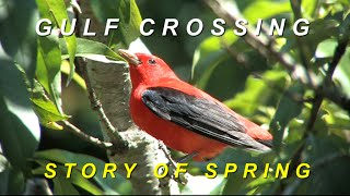 Download Gulf Crossing: Story of Spring Video