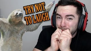 Download TRY NOT TO LAUGH - Animal Fails Video