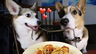 Download Real Life Romantic PUPPY Date from Lady and the Tramp Video