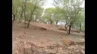 Download TIGER AT RANTHAMBORE ZONE 3 Video