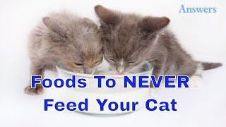 Download 7 Foods You Should Never Feed Your Cat Video