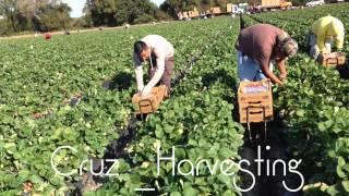 Download Trabajo en la fresa en perrish Florida Video