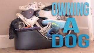 Download Owning a dog Video