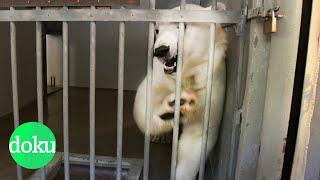 Download Der Zoo: Tiergefängnis oder Artenschutz? | WDR Doku Video