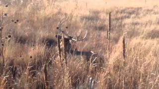 Download How to stalk and touch a deer Video