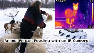Download Winter Feeding with a Thermal IR Camera Video
