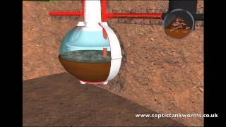 Download Septic Tank Worms Video