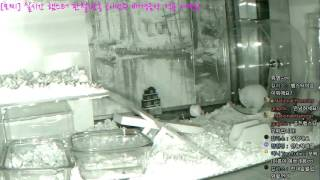 Download [모찌 Live] National Hamster graphic (실시간 햄스터 방송) #16-11-26 Video