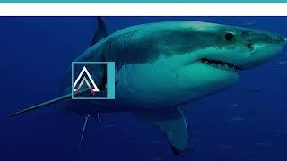 Download Die größten Tiere ihrer Art Video