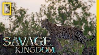 Download No Place Like Leopard Rock | Savage Kingdom Video