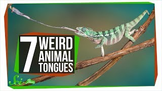 Download 7 Animals with Really Wild Tongues Video