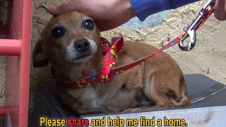 Download A sick three legged dog sleeps in the rain on a shoebox and waits months to be rescued Video