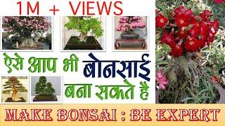 Download ऐसे आप भी बोन्साई पौधा बना सकते हैं | MAKE BONSAI PLANT : Be Expert Video