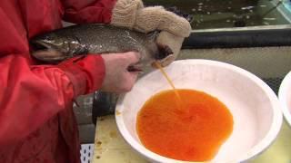 Download Nova Scotia Fishing Hatcheries Video