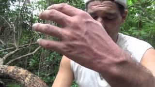 Download FRANK CUESTA - Me muerde una víbora (Natural Frank) Video