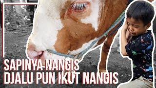 Download dehakims Idul Adha | SAPI NYA NANGIS, DJALU PUN IKUT NANGIS..! Video
