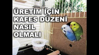 Download Muhabbet Kuşu Üretimi İçin Kafes Düzeni Nasıl Olmalı Video