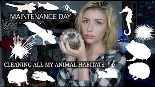 Download CLEANING ALL OF MY ANIMAL HABITATS Video