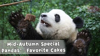 Download Mid-Autumn Day Special: Mooncakes Are Pandas' Favorite! | iPanda Video