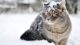 Download The Wonderful World of Cats - HD Nature Wildlife Documentary Video