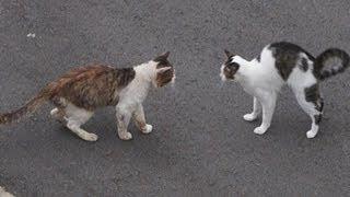 Download ドキュメント『猫が友達になる瞬間』 Video