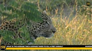 Download Wild Africa Tingana update and Hosana at the end 25 April2018 Video